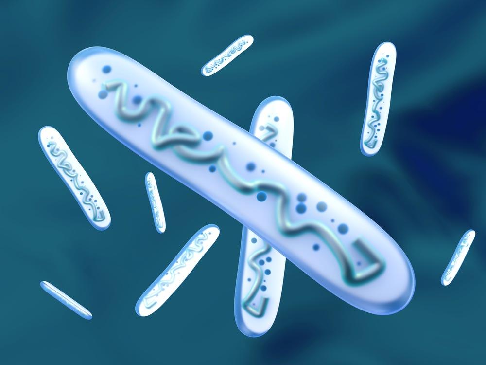 פרוביוטיקה - חיידקים פרוביוטיים